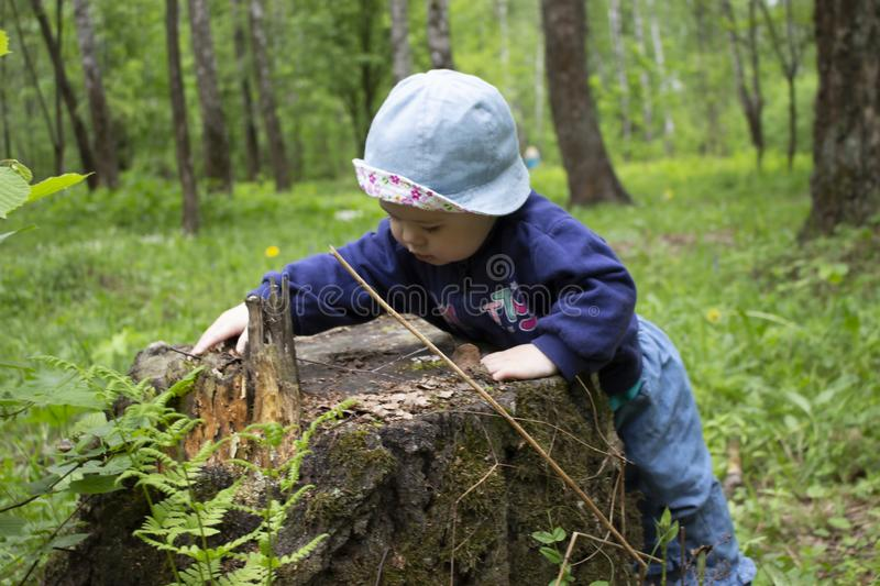 Baby girl exploring the stump in the forest. The kid in Panama touches the stump of a tree. First steps in the forest royalty free stock images