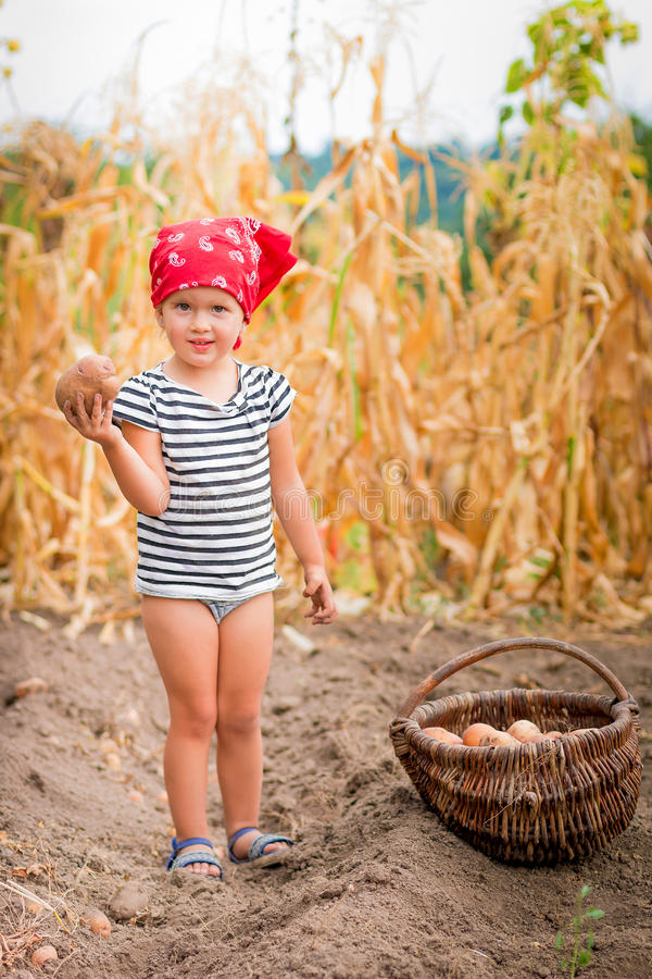 Baby girl on the garden with harvest of potatoes in the basket near field dry corn background. Dirty child in red. Baby girl on the garden with harvest of royalty free stock image