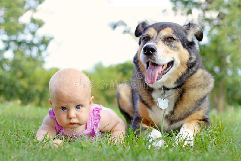 Baby Girl Laying Outside with Pet German Shepherd Dog. A cute 6 month old baby girl is laying outside in the grass next to her loyal German Shepherd Dog stock images
