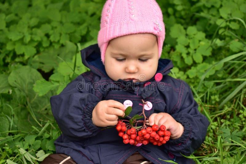 Baby girl with Rowan royalty free stock image