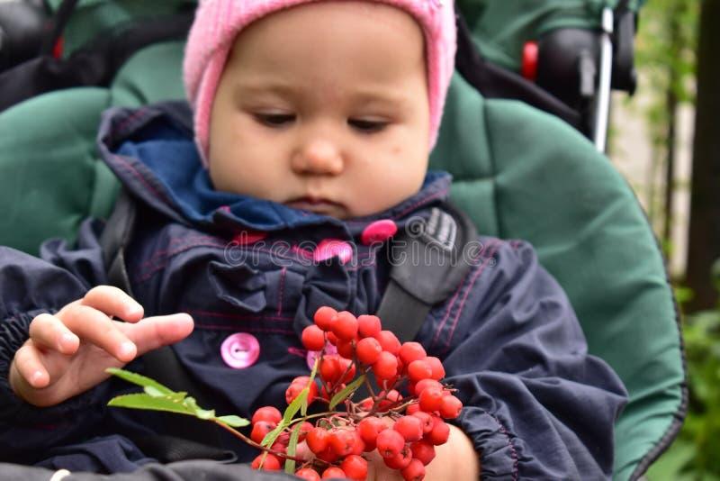 Baby girl with Rowan stock photography