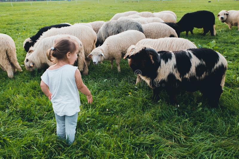 Baby girl with sheep in green meadow royalty free stock image