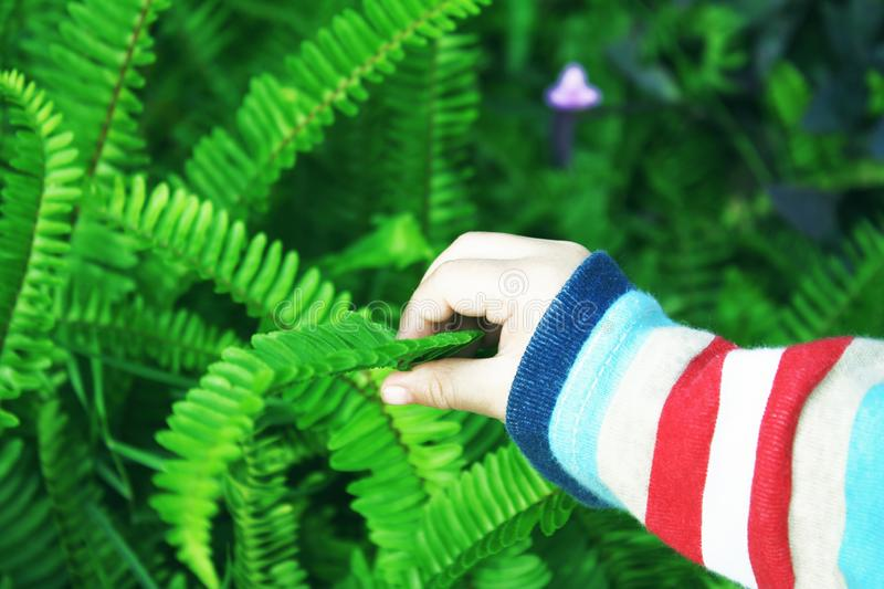 Baby girl touching green leaf fern background stock image