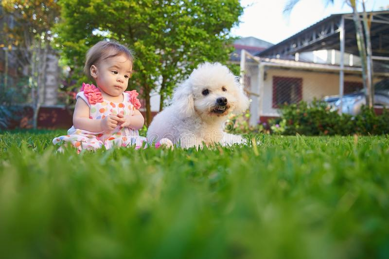 Baby girl want play with poodle. Outdoor on green grass royalty free stock photos
