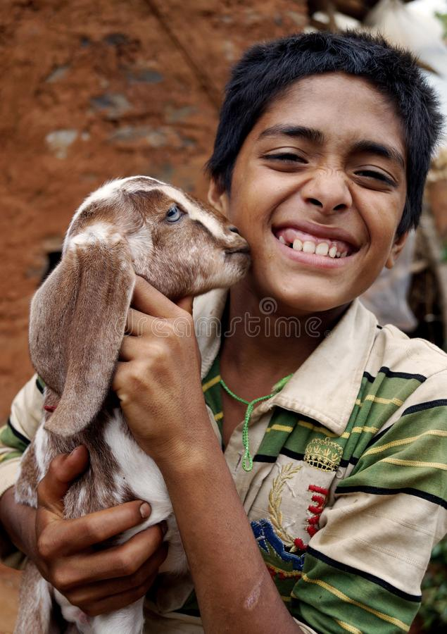 Baby Goat kissing a boy stock images