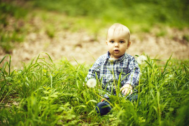 Baby in grass with white dandelions. Nice open-eyed baby boy sitting in green grass with white dandelions in blue checkered shirt, horizontal photo royalty free stock images