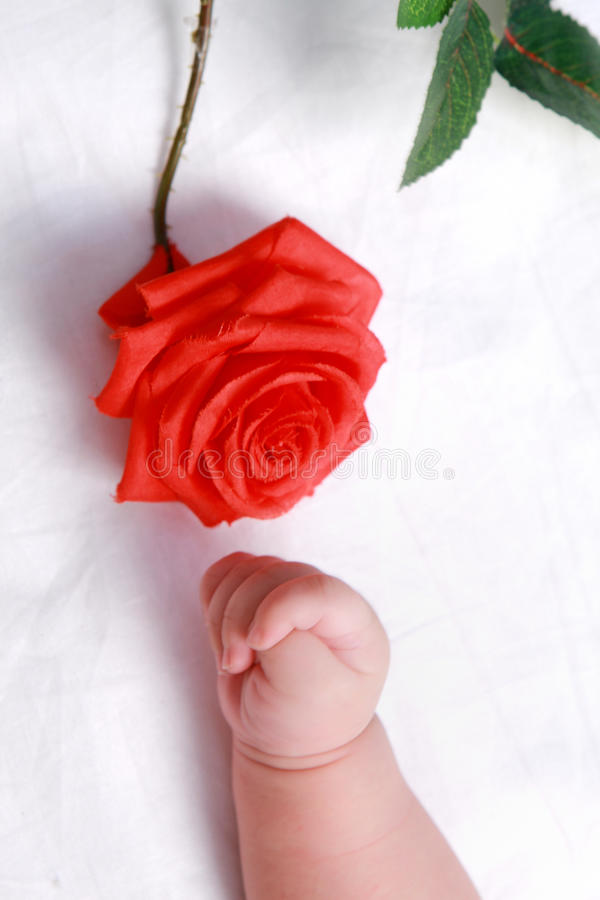 Baby hand and flower royalty free stock photos