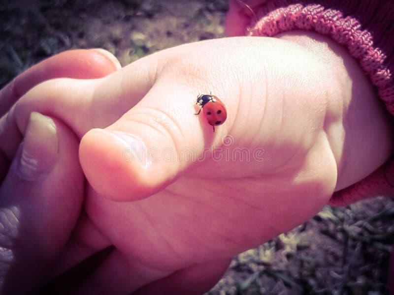 Baby hand and ladybug creeping up royalty free stock photography