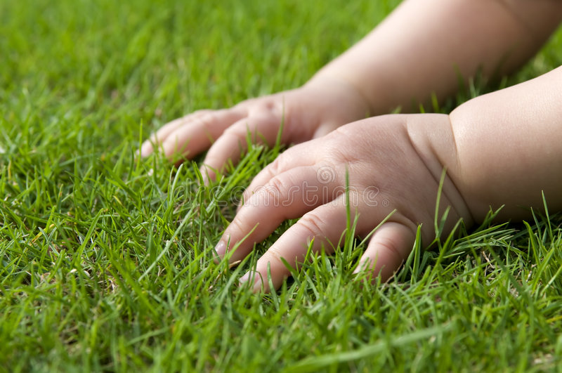 Baby hands on grass royalty free stock image