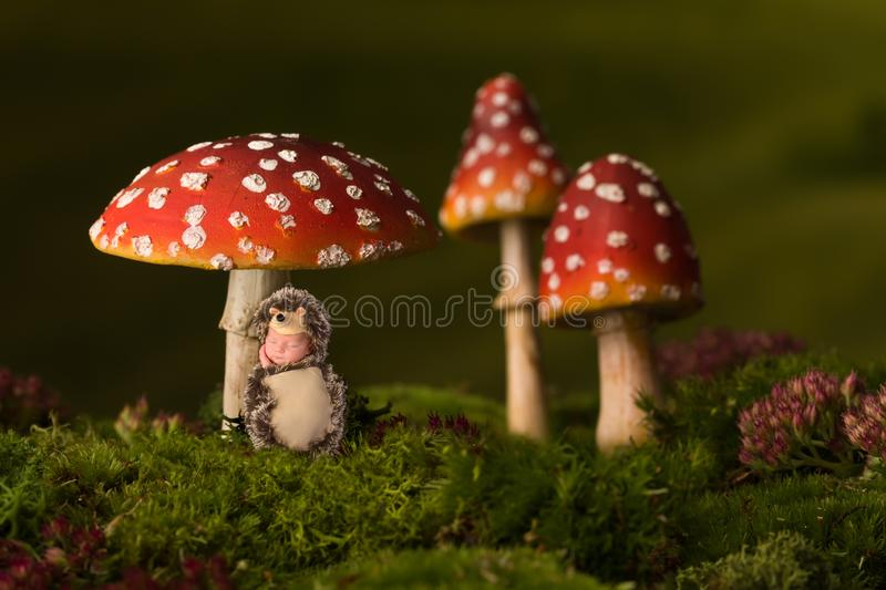 Baby hedgehog sleeping under toadstools. Little baby in hedgehog costume sleeping under fly agaric toadstools stock image
