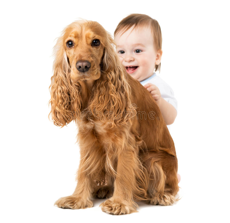 Baby hides behind the dog stock photography