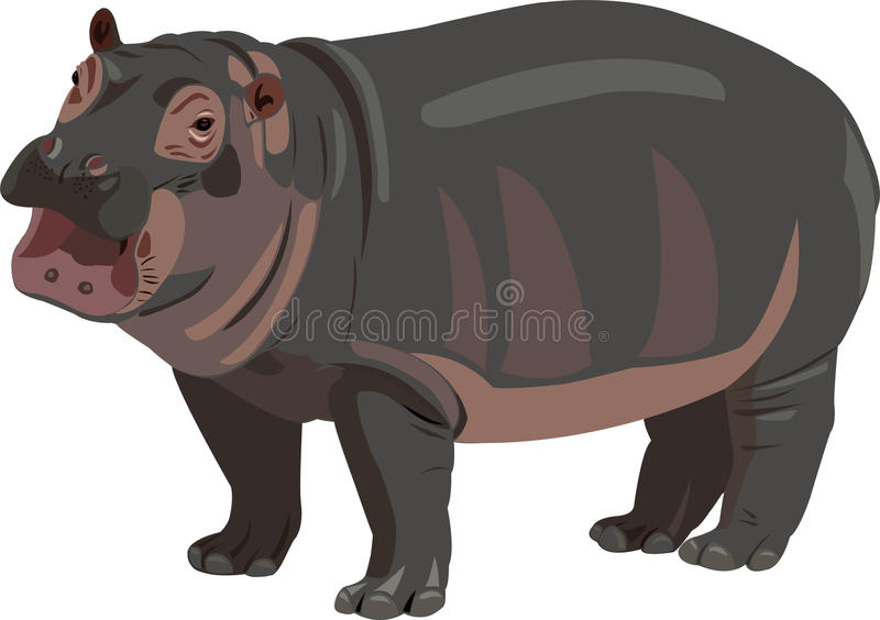 Download Baby hippo stock vector. Illustration of king, tall, mammal - 9540303