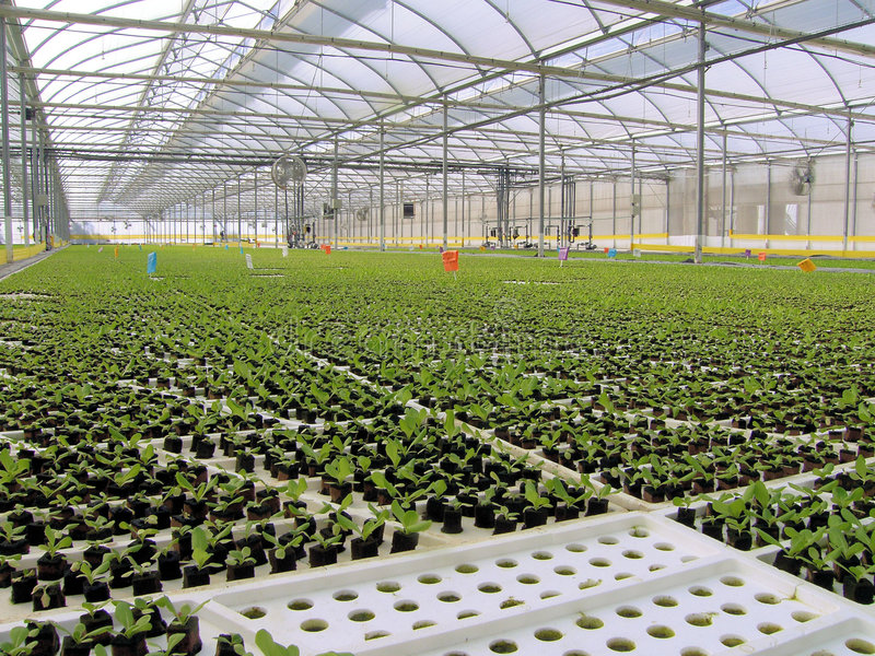 Download Baby Hydroponic Lettuces stock image. Image of recycle - 3801955