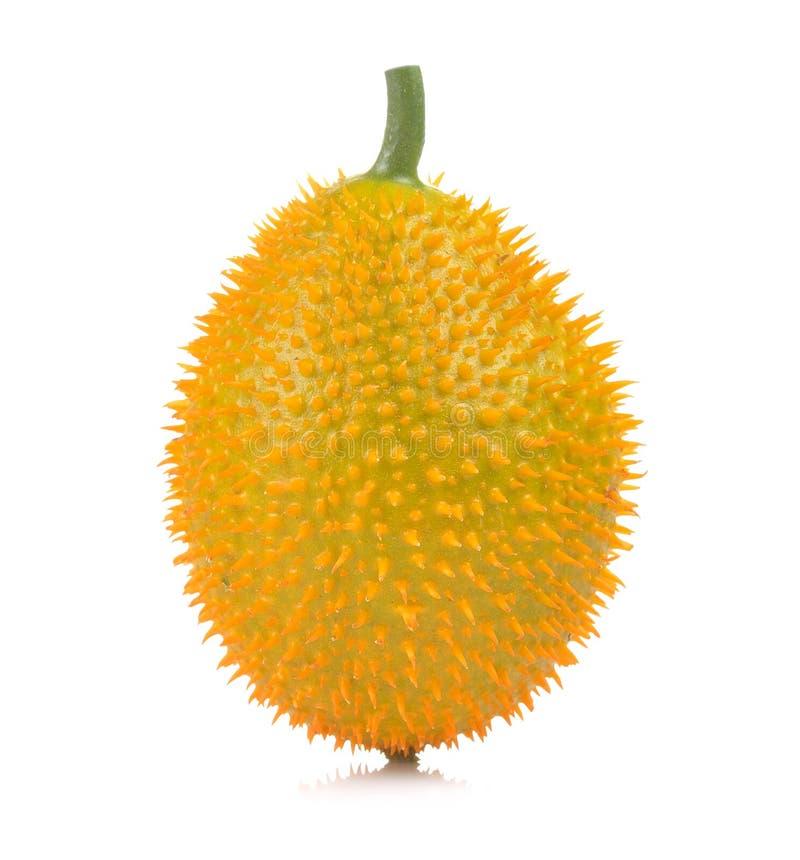 Baby Jackfruit, Doornige Bittere Pompoen, Zoete Grourd of Cochinchin G stock foto's