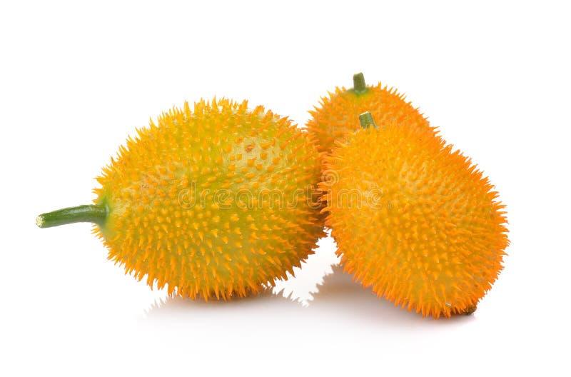 Baby Jackfruit, Doornige Bittere Pompoen, Zoete Grourd of Cochinchin G stock fotografie