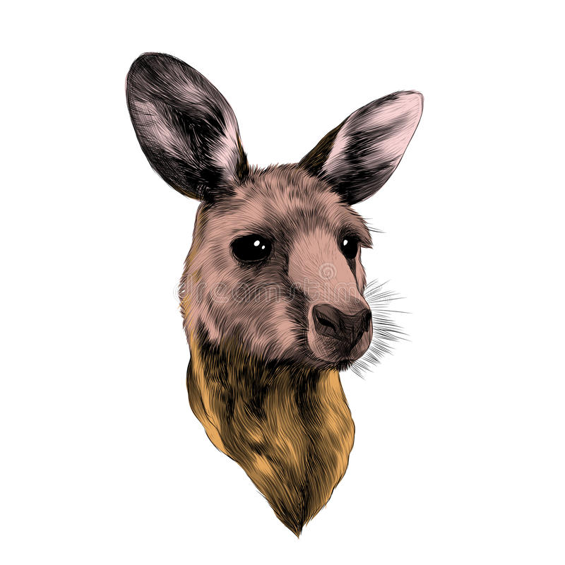 Baby kangaroo head. Funny cute baby kangaroo head sketch vector graphics color picture stock illustration