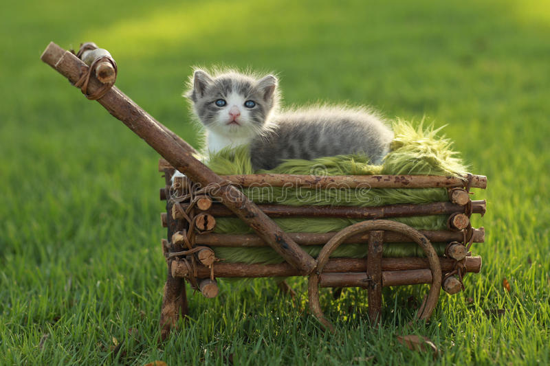 Download Baby Kitten Outdoors In Grass Stock Photo - Image: 26506150
