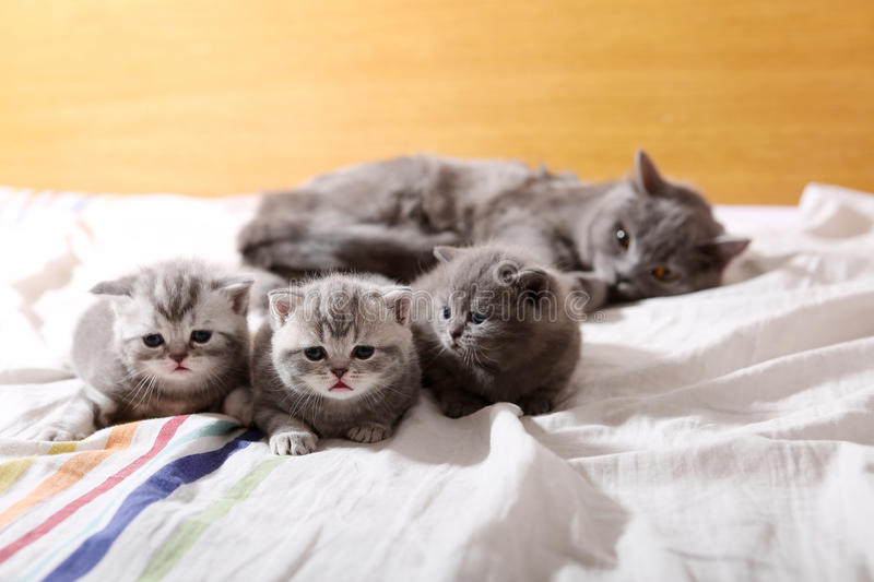 Baby kittens, first days of life stock photos