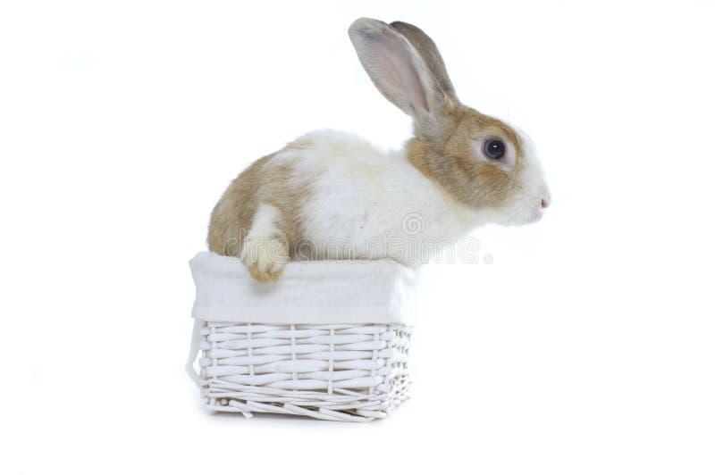 baby konijn stock foto's