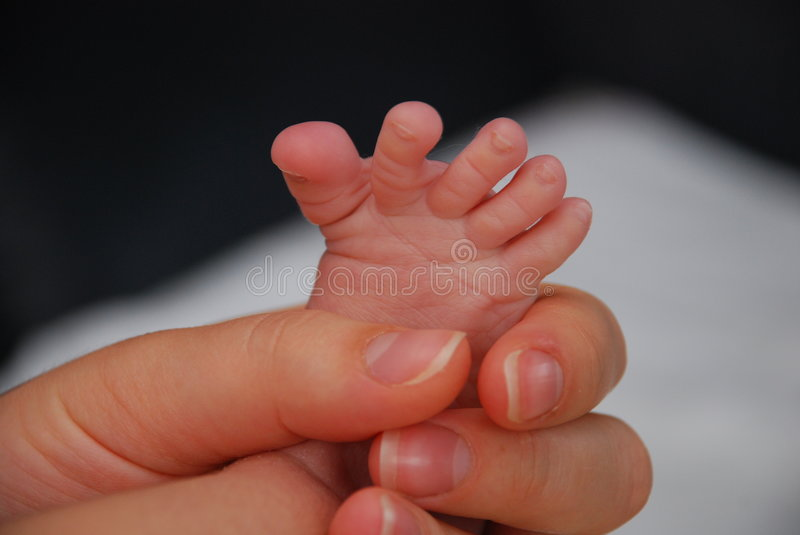 Download Baby little foot stock image. Image of offspring, nature - 5986347