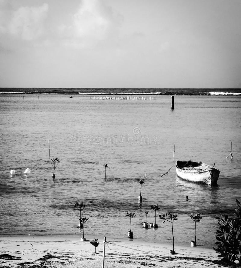Black and white photo of a Dominican Republic beach with boat and baby mangrove trees stock photo