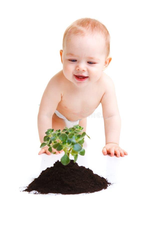 Baby met installatie royalty-vrije stock foto