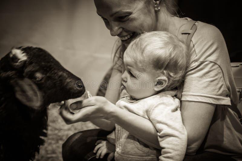 Baby mit Fütterungstier der Mutter am Streichelzoo stockbilder
