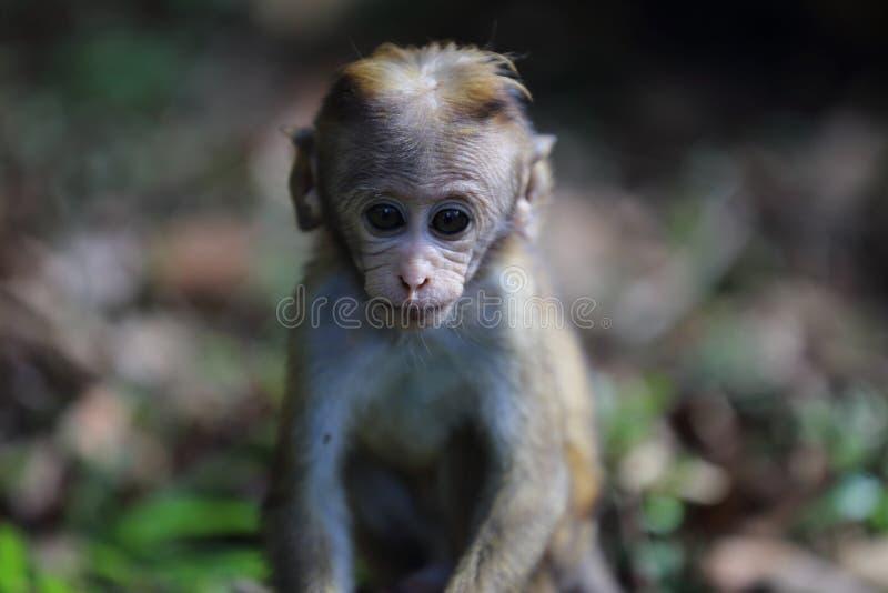 Baby Monkey stock images