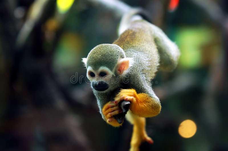 Baby Monkey * stock photo