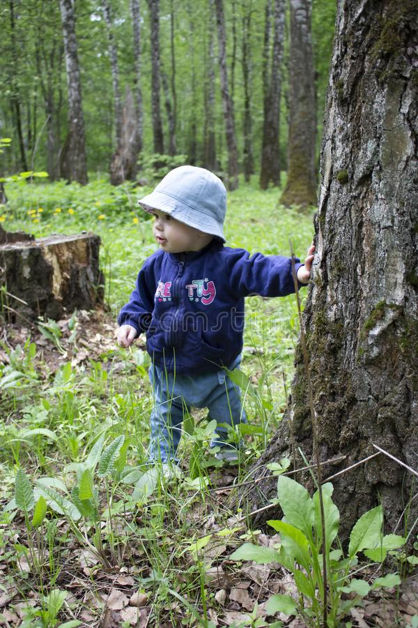 Baby 8-9 months takes the first steps in nature. A girl in the woods looks around holding onto a tree trunk. Girl in jeans and a royalty free stock photos