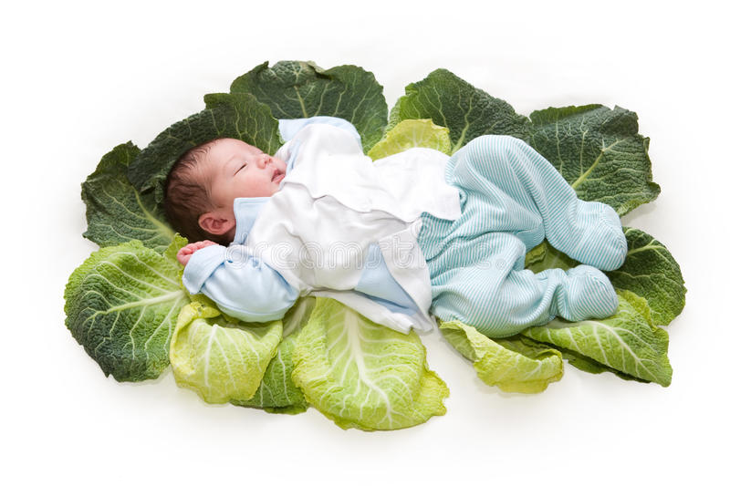 Baby newborn in cabbage leaves. Isolated on white stock photography