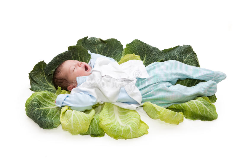 Baby newborn yawns in cabbage leaves. Isolated on white royalty free stock photos