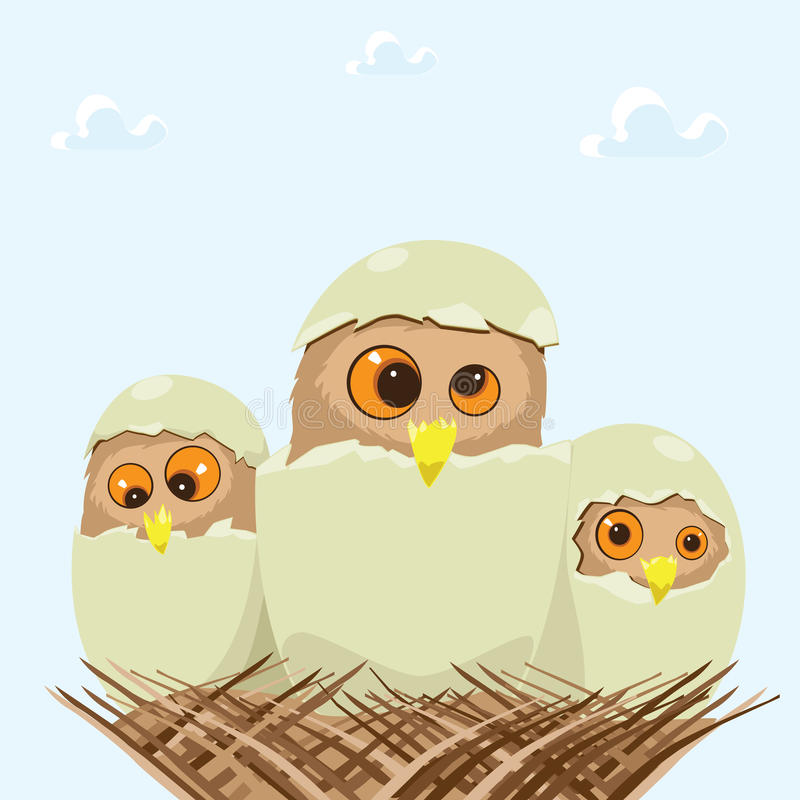 Baby Owl stock photo