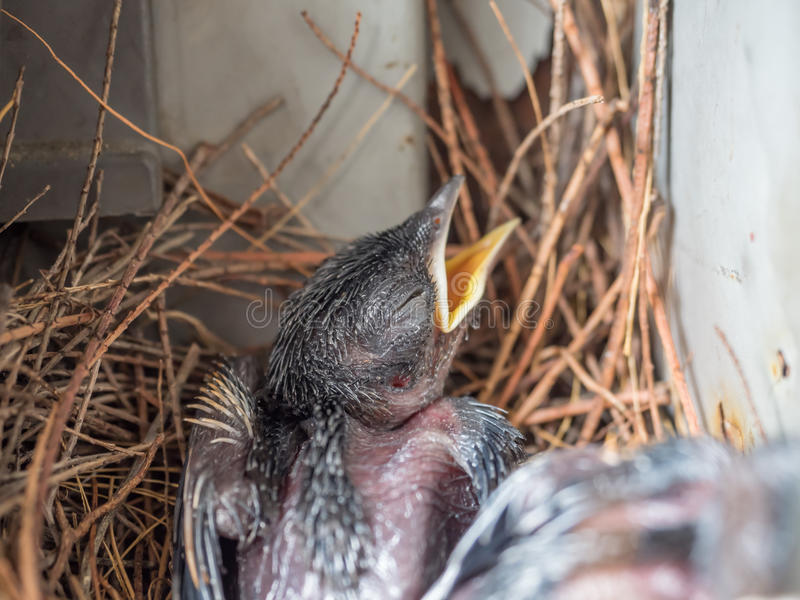 Baby Pigeon Nest In Load Panel Box Stock Photo - Image of ...