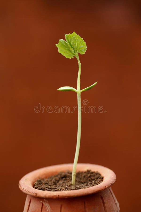 Baby plant royalty free stock photos
