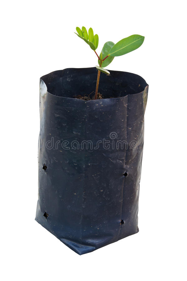 Download Baby Plant Royalty Free Stock Photo - Image: 26468745