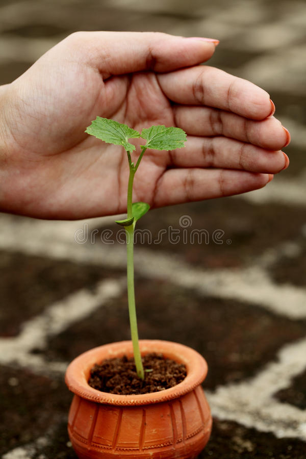 Baby plant-Care royalty free stock photo