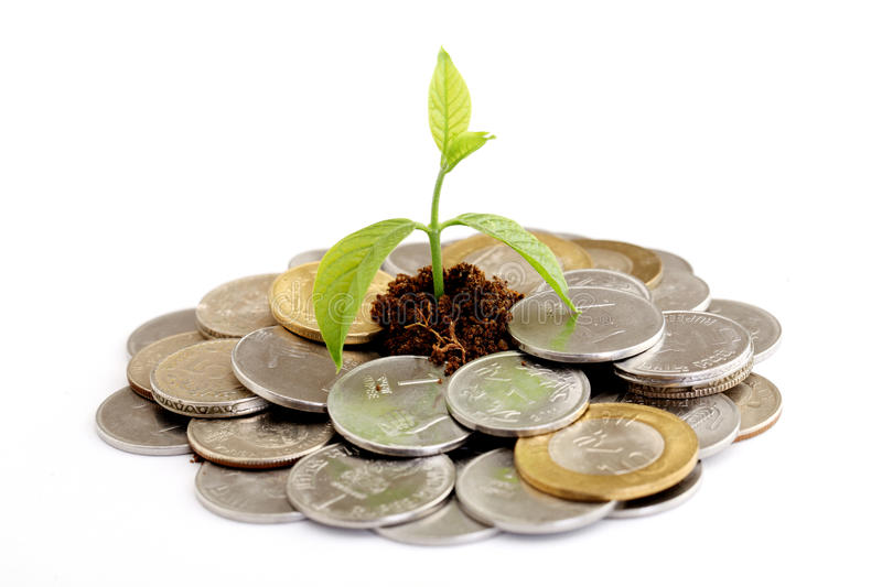 Baby Plant Growing On Indian Currency Stock Image - Image ...