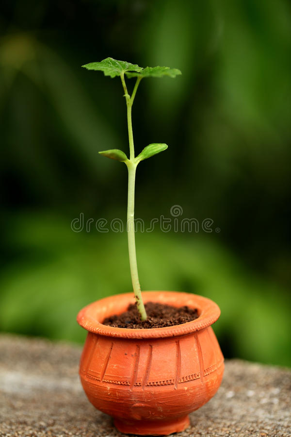 Baby plant-New life royalty free stock image