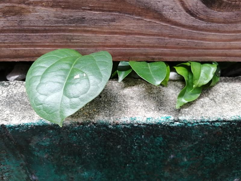 Plants grow up under wood box royalty free stock photography