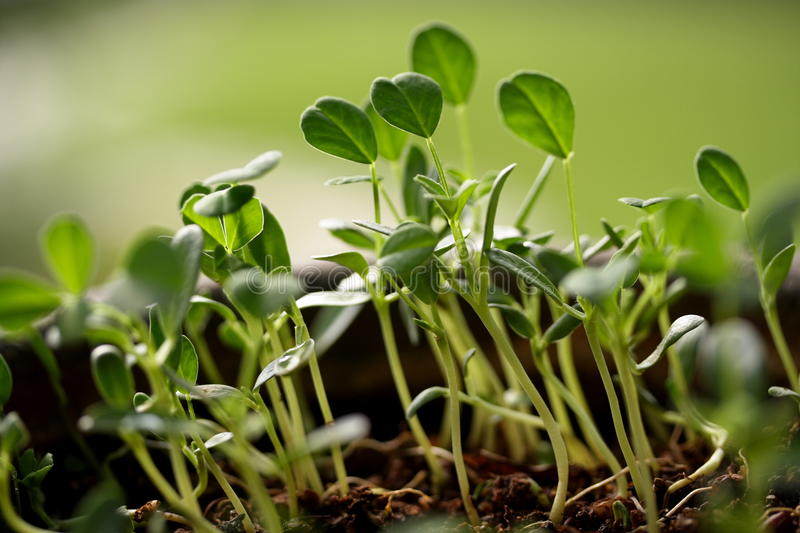 Baby plants-New life royalty free stock images