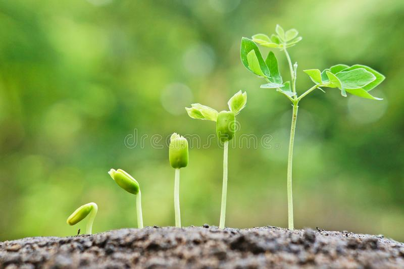 Baby plants seedling stock images