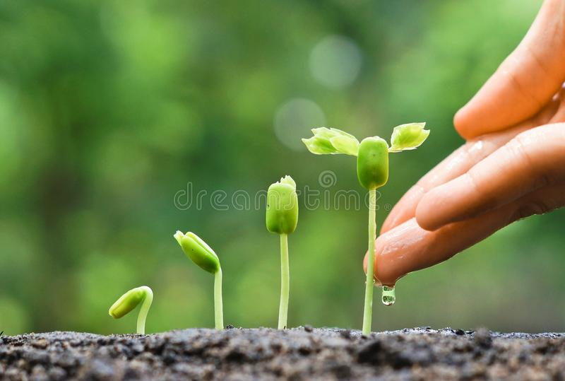 Download Baby plants seedling stock photo. Image of land, growth - 56751218