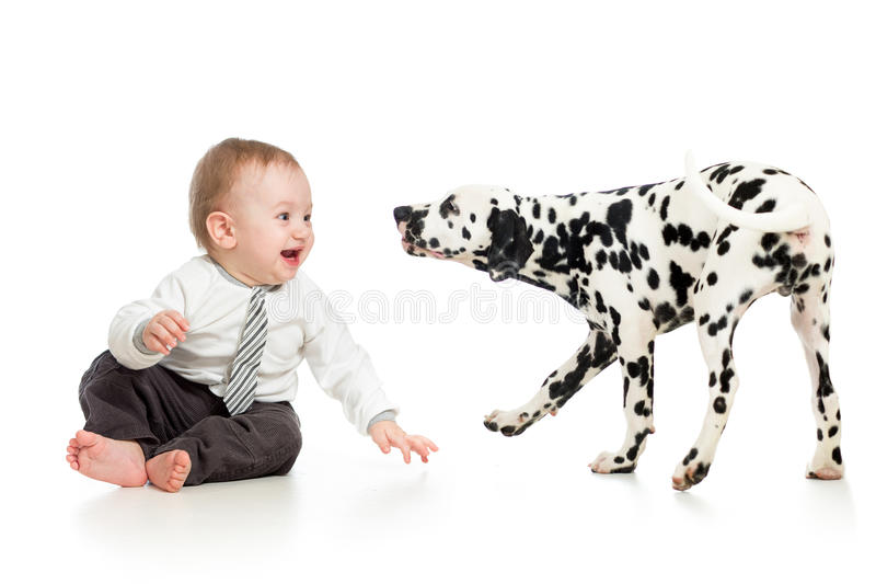 Baby playing with puppy dog. Baby boy playing with dalmatian puppy dog royalty free stock photos