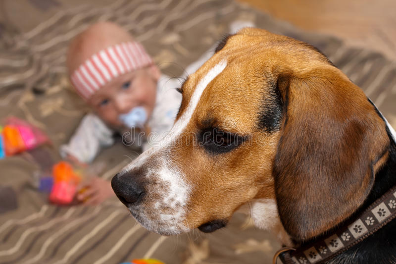 Download Baby plays with a dog stock image. Image of child, joyful - 14850493
