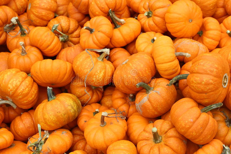 Baby Pumpkins royalty free stock images