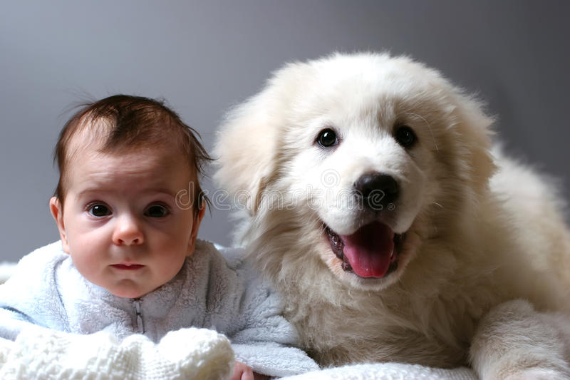 Baby and puppy. Baby and sheepdog puppy lain together on white blanket