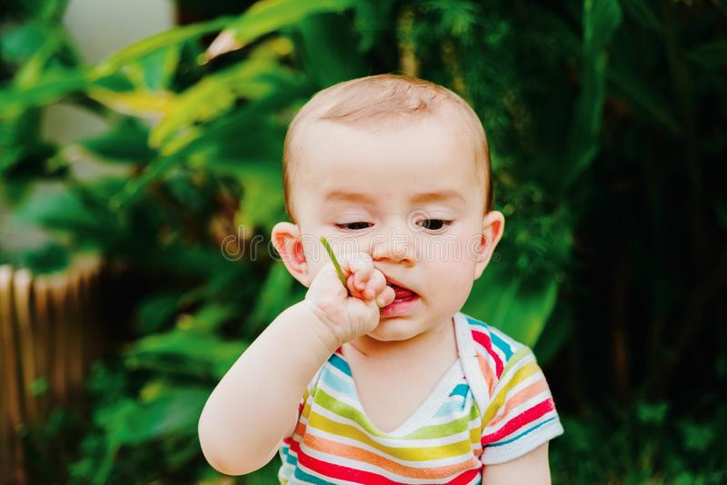 Baby putting in his mouth a flower of a garden, concept of dangers for babies royalty free stock photo