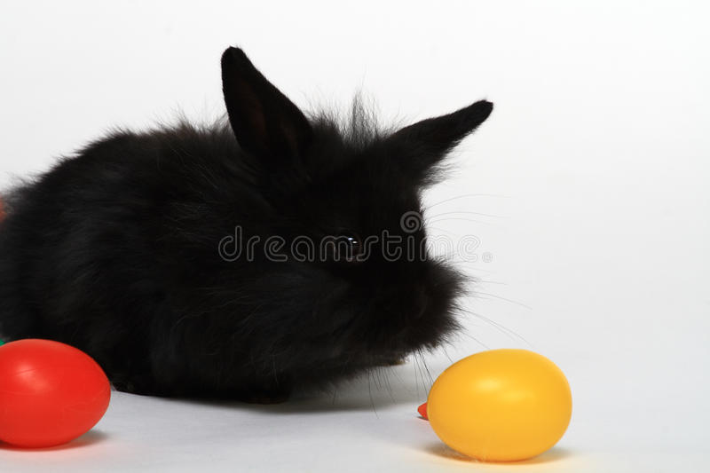Baby rabbit and toy eggs royalty free stock image