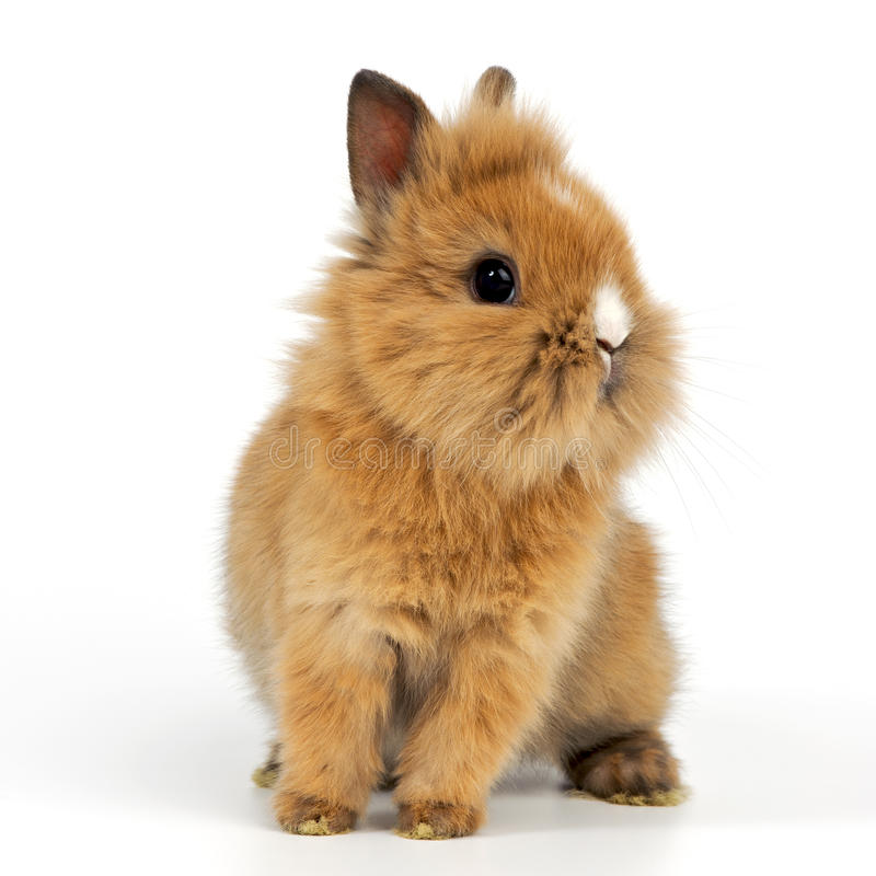 Baby rabbit. On white background stock photography